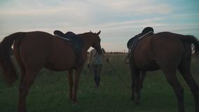 Girl and two horses on the field. Girl and two beautiful horses graze on the field. The horses chew the grass. Two horses outdoors. Beautiful horses stock video