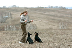 The girl with two dogs. In the late autumn in a wood Stock Image