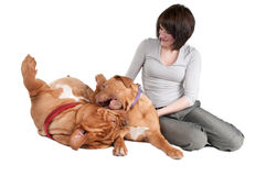Girl and two dogs playing Royalty Free Stock Images