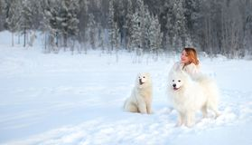 Girl and two dogs Samoyed in the winter forest. Smiling girl and two dogs samoyed in the winter forest Stock Photo