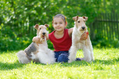 The girl and two fox terriers. The little girl with two dogs of breed fox terrier on a green lawn Royalty Free Stock Photography