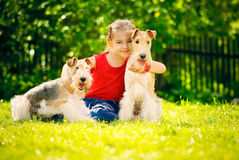 Girl and two fox terriers Stock Image