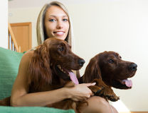 Girl with two Irish setters at home. Attractive girl hugging two Irish setters on sofa and smiling. Focus on girl Stock Photos