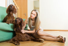 Girl with two Irish setters at home. Charming girl playing with two Irish setters on the floor at home. Focus on dog Royalty Free Stock Image