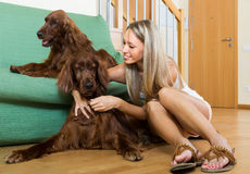 Girl with two Irish setters at home. Charming girl sitting on the floor at home with two Irish setters. Focus on girl Stock Images