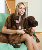 Girl with two Irish setters at home. Smiling attractive girl hugging two Irish setters on sofa. Focus on girl Stock Images