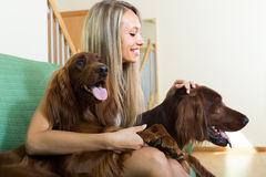 Girl with two Irish setters at home. Smiling attractive girl sitting on sofa with two Irish setters. Focus on girl Stock Photography