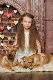 Girl with two puppies Royalty Free Stock Image