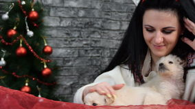 Girl with two puppies in the New Year ambience stock video