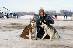 Girl and two Siberian huskies in the suburban area of Novosibirsk stock photography