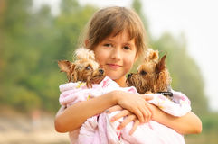 Girl with two  yorkshire terriers Royalty Free Stock Photos