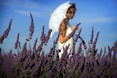 Girl with Umbrella Walking among Lavender Royalty Free Stock Images