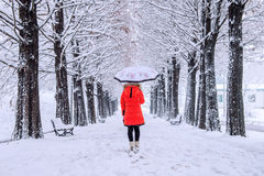 Girl with umbrella walking on the path and row tree. Winter. Stock Photo
