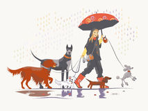 Girl under rain 2. Girl, dog walker, is taking pack of dog for a walk Royalty Free Stock Photography