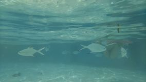 Girl under water with fish in the sea. Travel, lifestyle, summer beach holiday. 4k stock video