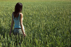 Girl in the unripe green wheat field Stock Image