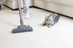 Girl vacuuming the house. bright carpet and light leath sofa stock images