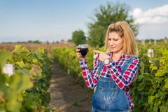 The girl in the vineyard. Drink red wine Royalty Free Stock Images