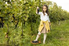Girl in vineyard. View at Little girl with grapes in vineyard royalty free stock image