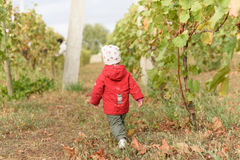 Girl in Vineyard Stock Photo