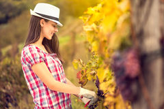 Girl in vineyard Royalty Free Stock Photos