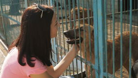 Girl volunteer in the nursery for dogs. Shelter for stray dogs.  stock video footage