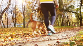 Girl  walk about  with beagle puppy in autumnal park Royalty Free Stock Photo