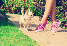 Girl on the walk with chihuahua in the park Royalty Free Stock Image