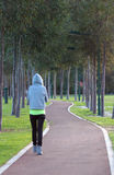 Girl walking. On tree lined path royalty free stock image