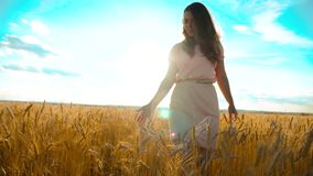 Girl is walking along the wheat field nature slow motion video. Beautiful girl in white dress running nature freedom. Happiness hands to side on field at sunset stock footage