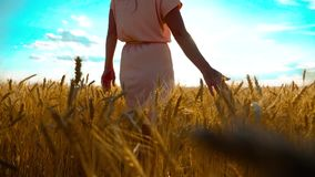 Girl is walking along the wheat field nature slow motion video. Beautiful girl in white dress running nature freedom. Girl is walking along wheat field nature stock video footage