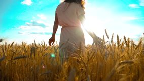 Girl is walking along the wheat field nature slow motion video. Beautiful girl in white dress running nature freedom. Happiness hands to the side on field at stock video footage