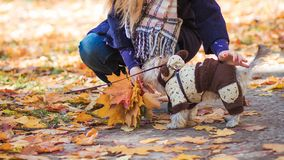 A girl is walking with a dog in the park Royalty Free Stock Photo