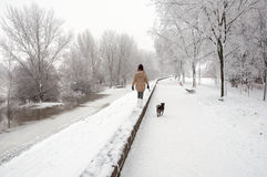 Girl walking the dog on snowy winter day stock image