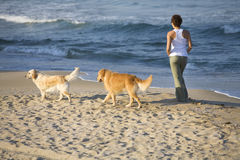 Girl walking with dogs Royalty Free Stock Photos