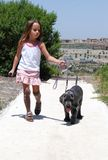 Girl walking her dog. Little girl walking her new Great Dane puppy Royalty Free Stock Photo