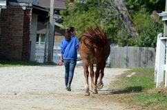 Girl walking horse on the farm. A teenage girl walks with her horse on a sunny summer day Royalty Free Stock Image