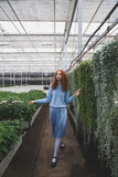 Girl walking in orangery Stock Images