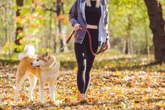 Woman walking in park with her dog. Girl walking in park with her dog Stock Photo