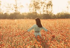 Girl walking through poppy meadow and touching flowers. Beautiful girl walking through poppy field and touching flowers, summer vacations royalty free stock photography