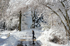 Girl walking in snow covered landscape Royalty Free Stock Image