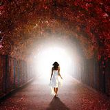 Girl walking towards the light. Lonely girl in white summery dress walking through an arch created by trees red with Autumn leaves towards a bright  almost Royalty Free Stock Image