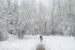 A girl is walking under the snow with a fur in a park in Moscow stock photography