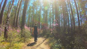 Girl walks along a forest trail among the pink flowers of Rhododendron timelapse. Girl walks along a forest trail among the pink flowers of Rhododendron in a stock video