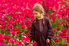Girl walks through a field of red buttercup flowers royalty free stock photography