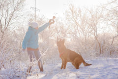Girl walks her German Shepherd dog. German Shepherd playing with toy and his mistress in winter sunny day. Girl walks her German Shepherd or dog on background of Stock Images