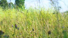 A girl walks through a meadow in a black dress. stock video footage