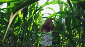 A Girl Walks Between Rows of Cornfield stock video footage