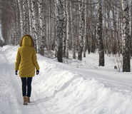 The girl walks on a snow-covered road along the forest. The girl walks on a snow-covered road, along the birch forest Stock Photo
