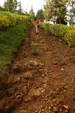 Girl Walks up Steep Rocky Path. A girl walks up a very steep and rocky garden pathway stock image